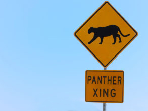 Panther Crossing Road Sign photo